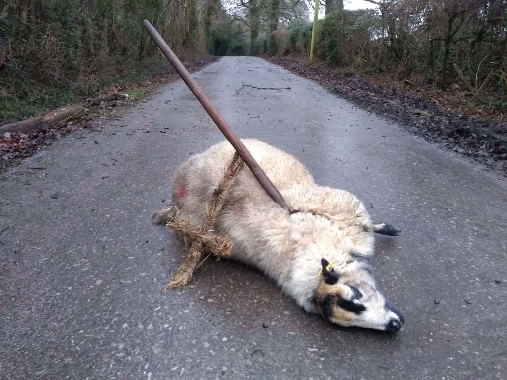 The body of the ewe was found in Kewlake Lane, Cadnam