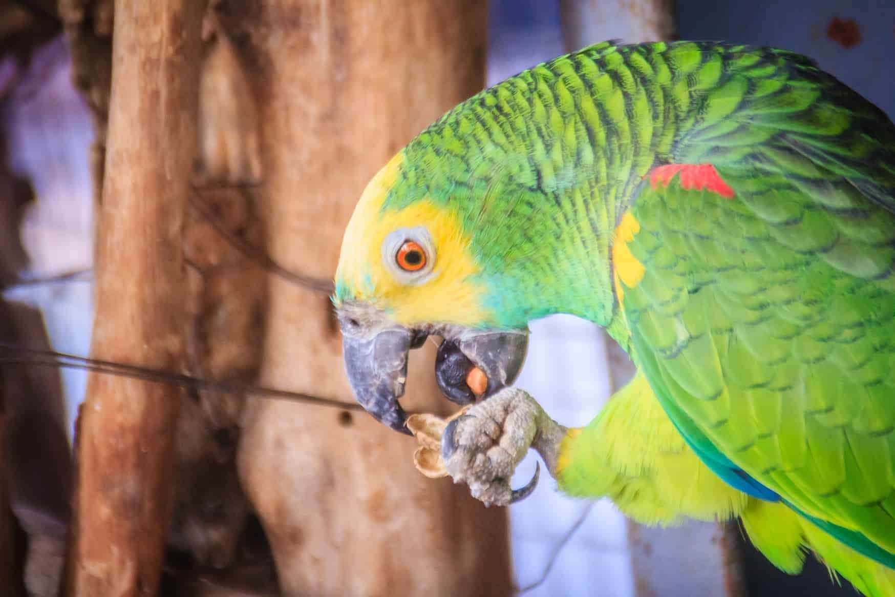 Two double yellow-headed parrots like this one were stolen in the raid (stock image)