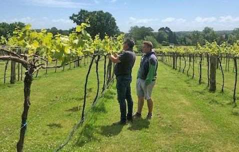 Sandy Booth and his son Adam at the vineyard run by New Forest Fruit Co.
