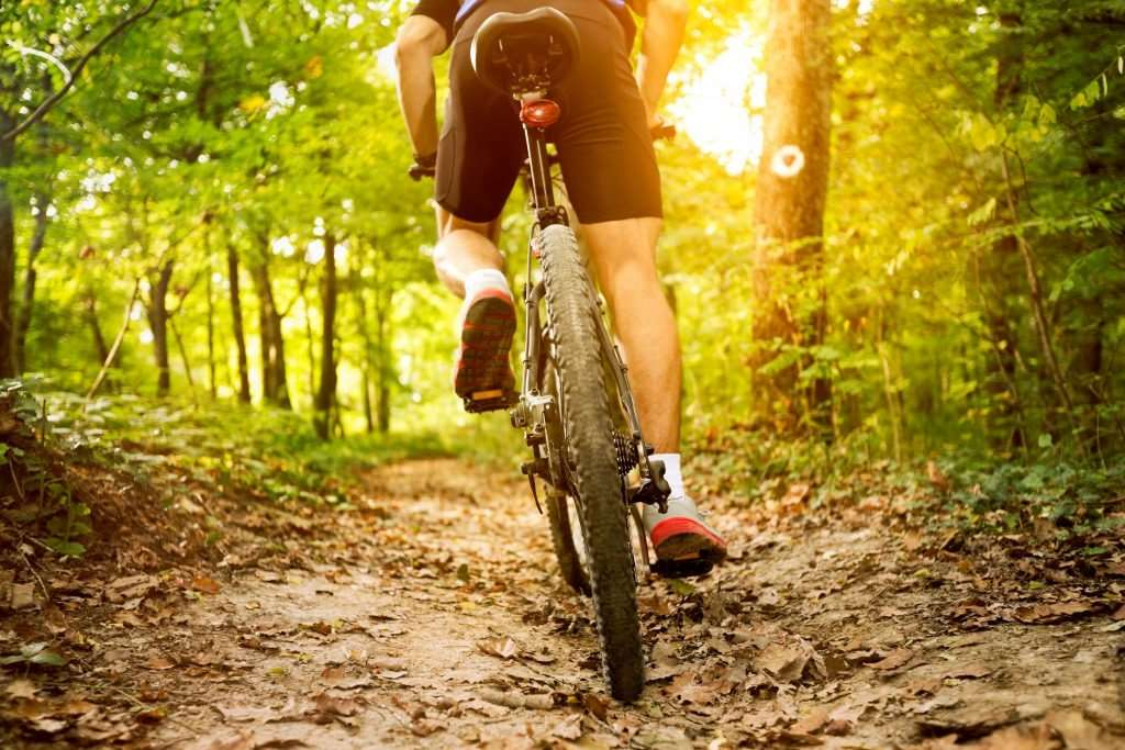 Forestry England was told to come up with a plan to tackle off-track cycling