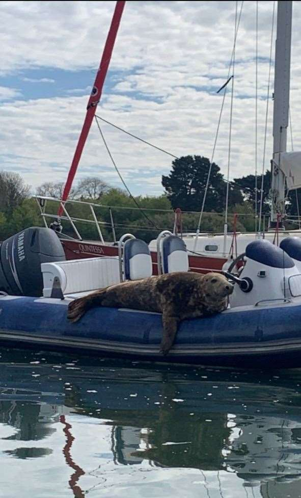 14th May 2021: John Selman spotted this seal relaxing on Beaulieu River