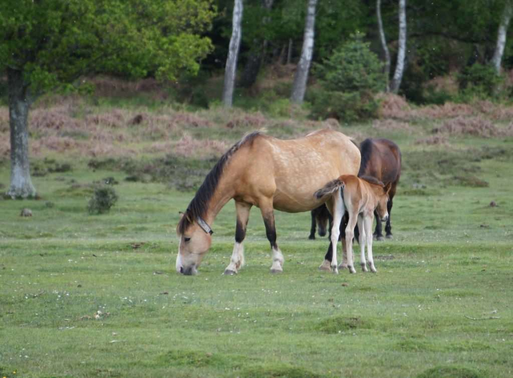 Concerns were raised that stock fencing along New Forest roads is not strong enough