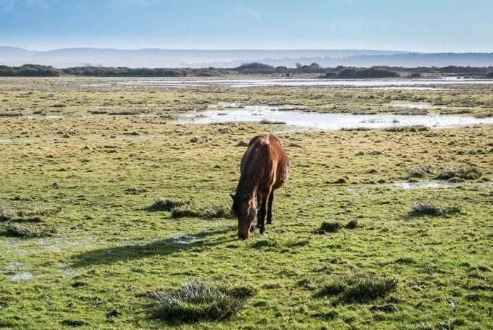 Wet weather has led to more ponies than usual being removed from the New Forest this year (Photo: stock image)