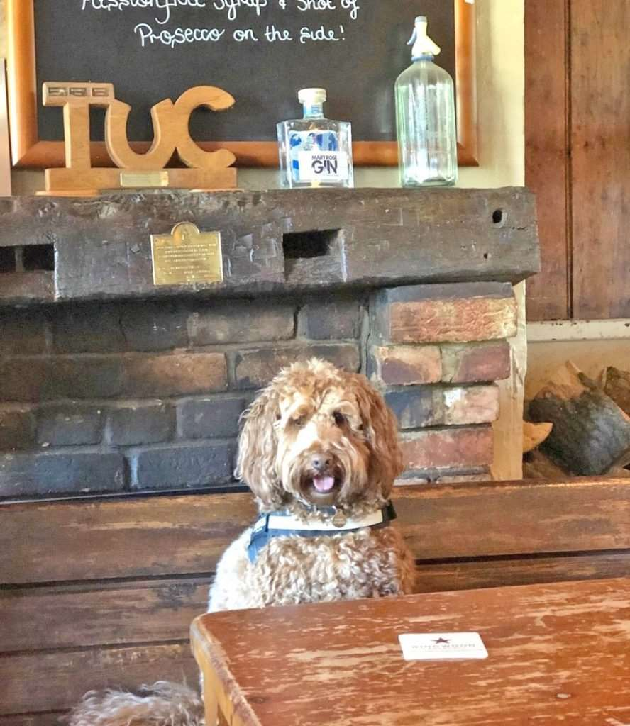 Basil the labradoodle at the East End Arms
